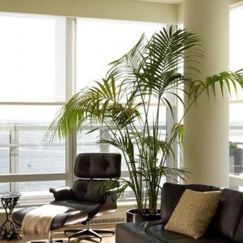 salas-decoradas-con-plantas-1